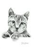 Gato (sergiomorenomerino1) Tags: dibujo draw grafito graphite lapiz pencil dibujorealista realismo realism