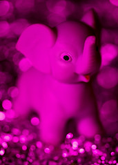 Awash In Pink Bokeh (melmark44) Tags: bokeh aluminumfoil videolight led gel pink elephant dof shallowdepthoffield selectivefocus continuouslight tabletop creative experiment canoneos5dmarkiv ef100mmf28macrousm elbokehwall