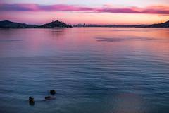 We'll Always be Together (rowjimmy76) Tags: sanfrancisco northerncalifornia city tiburonbay canon sl1 landscape sunset pink sky water reflection skyline hills bayarea marin efs24mm f28 stm blue