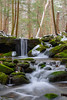 PA State Game Lands #42 (clare j kaczmarek) Tags: forests appalachia laurehighlands stategamelands42 mountainstreams winter moss rocks waterfalls