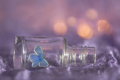 waiting for spring for macro mondays 'in a bottle' (Emma Varley) Tags: inabottle macromondays butterfly bottle bokeh dream lights commonblue silk purple winter creative stilllife