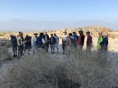 2018-02-15 GOPS Geology Hike (103) (MadeIn1953) Tags: 2018 201802 20180215 greatoutdoorsgo go gops greatoutdoorspalmspringsgops hiking california coachellavalley riversidecounty meccahills paintedcanyon laddercanyon geologywalk