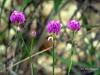 Cerrado´s flowers (✿ Graça Vargas ✿) Tags: flower graçavargas ©2018graçavargasallrightsreserved flordocerrado cerrado´sflower wildflower 19407160218