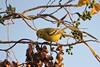 The morning obeisance to the sun (rufaro) Tags: bird morning sunlight nature nagpur maharashtra india