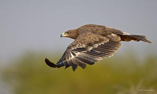 Eagle Eye...