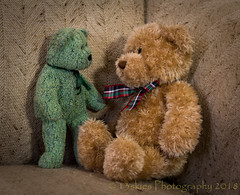 And Then Right After That (HTBT) (13skies) Tags: bears two teddybear secrets message conversation private speaking silence lies hell talking conversing tuesday teddybeartuesday funny quiet trouble brownbear happyteddybeartuesday whispers greenbear