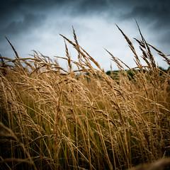 Перед грозой / Before the Storm (Yuri Balanov) Tags: sky summer russia pentax pentaxk20d storm weat wind clouds rain