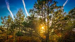 Sun Tree (Bak0l0) Tags: daneprisežani sežana slovenia si