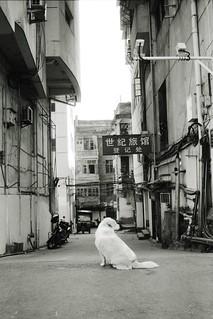 Dogs in Shunchang