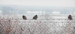 Winter Landscape (Inka56) Tags: landscape 7dwf starling fence bush mist riverside danube winter frozen ice