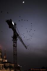 Landebahn mit Aussicht (BigT_DD) Tags: dresden nacht kran vögel