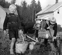 Spuds are Us (theirhistory) Tags: boys children kids field potatoes pail earth wellies shorts shoes jumper wellingtons girl dungarees