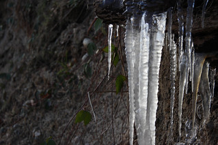 Icicles by the sea