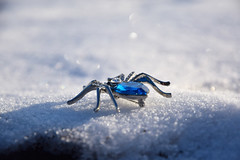 20180126_015_2 (まさちゃん) Tags: 雪 蜘蛛 broach ブローチ