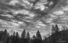 Afternoon Walk (Joan Gray) Tags: clouds blackandwhite bnw mehamaor firtrees oregon