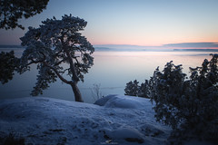 Kuuvannokka (tommi.vuorinen) Tags: ruissalo turku finland archipelago tree landscape nature frozen winter cold sunset hill bush lighthouse waterside serene
