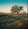 A shitty day in Namibia (Gabain) Tags: rolleiflex namibia dessert 28gx kodak ektar 120 6x6 film