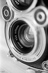 8 (Film_Fresh_Start) Tags: 24x36 argentique ilfordhp5800 macrophoto matosphoto pentaxlx slr takumarmacro50mm40 film bw nb