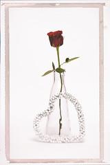 Rose in a Vase (Best Snaps) Tags: valentine valentineday love cupid rose vase flower studio lighting creative heart colour singleredrose stilllife inavase pretty one red green glass