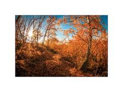 Herbstsonne (linke64) Tags: herbst sonne himmel thüringen rahmen gras baum wald bunte blätter birke jahreszeiten deutschland laub landschaft natur germany