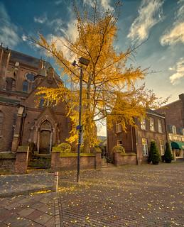 St. Catherine's autumn tree, Eindhoven.