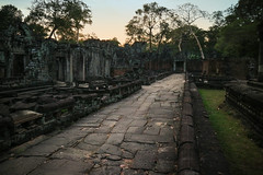 Evening in the temple ruins (preze) Tags: taprohm tombraidertemple angkor siemreapprovince kambodscha cambodia südostasien stone steintempel templeruin tempelruine sandstein khmer ruinen