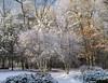 Winter sunshine (Tim Ravenscroft) Tags: woodland snow sunlight landscape hasselblad hasselbladx1d x1d