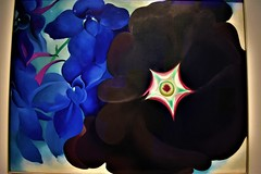 """Black Hollyhock Blue Larkspur"" (thomasgorman1) Tags: painting museum okeeffe art artwork oil canvas nm southwest nikon colors modernism modern flowers blue black larkspur hollyhock"