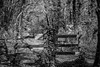 No Mountain Bikes (Rookie Phil) Tags: outdoor daytime england devon dartmouth kingswear hoodownwood springtime spring woods forest trees mountainbikesprohibited nationaltrust nationaltrustsign woodenbarrier stile barrier track path trail foresttrail buddingtrees sunlight sunshine lightandshade dappledsunlight beautifulday scenic tranquil rustic bucolic sylvan country rural arcadian monochrome blackandwhite bw 500mmf14 500mm 50mm nikond750 d750 skancheli