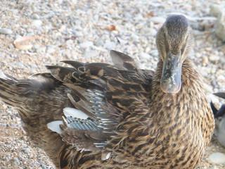 Duck!!  P1030414