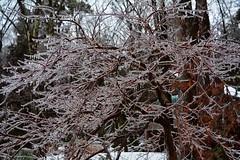 2018_0123More-Ice0014 (maineman152 (Lou)) Tags: winter winterweather badweather icestorm icecovered ice nature naturephoto naturephotography january maine