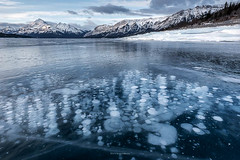 Abraham Lake #2 (Bruce Patterson2011) Tags: yellow abraham lake mountains winter ice methane bubbles snow