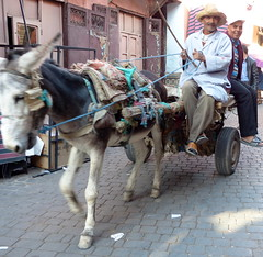 Schnappschuss-snapshot (Anke knipst) Tags: marokko morocco esel donkey wagen car marakesch