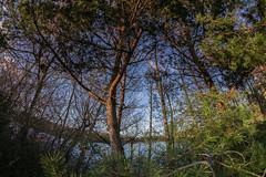 Colin's Hide, Moore Nature Reserve (joanjbberry) Tags: colinshide moorenaturereserve moore warrington nature reserve trees xt2 lake water fisheye samyang 8mm