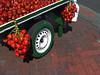 No. 1701 - 5 de febrero/18 (s_manrique) Tags: comida chontaduro llanta ladrillo