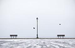 Breaking Through Silence (amy20079) Tags: nikond5100 benches beach ocean rain fog birds still maine newengland muted peaceful mood symmetric symmetry slush ice snow winter offseason empty minimal streetlight gray