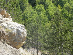 DSCN9562 (Gianluigi Roda / Photographer) Tags: apennines latesummer 2012 mountains geologicalevidences rocks trees woods landscapes