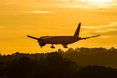 GRU_Sunrise (Edu_Perez) Tags: sbgr avião aeroporto aeronave airport aircraft airlines brasil brazil beautifull eduardo guarulhos gru hour sky landing planespotting plane planes spotting spotter são paulo perez sun sunrise swiss t7 777 boeing