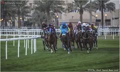 IMG_7142 copy (Services 33159455) Tags: qatar doha horse racing qrec emir horseracing raytohgraphy