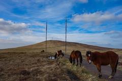 Ponies at Divis & Black Mountain (Eskling) Tags: ponies grazing moor heather blue sky transmitters aerial path mountain belfast belfasthills