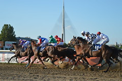 DSC_4967 (emina.knezevic) Tags: horses racing gallop hippodrome horsephotography horseracing jockeys hipodrombeograd mostnaadi beograd belgrade belgradehippodrome
