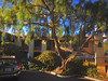 Petit Soleil, San Luis Obispo (iggy j) Tags: california sanluisobispo