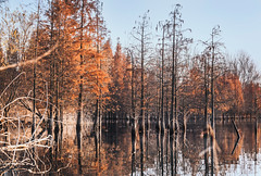 Autumn color (Picocoon图茧) Tags: autumn color red lake tree winter withered submerge wetland fantasy dream unreal surreal nature landscape