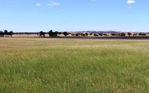 Coolamon NSW