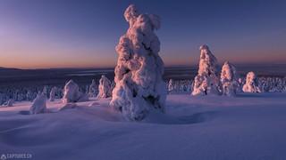 Morning glow - Lapland