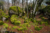 No hay camino (SantiMB.Photos) Tags: 2blog 2tumblr 2ig urbasa bosque forest otoño autumn musgo moss geo:lat=4287019414 geo:lon=215574679 geotagged urdiain navarra españa esp