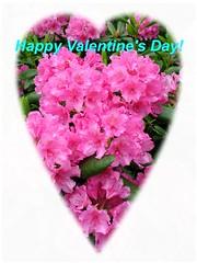 2018.02.14. happy valentine's day (villanne123) Tags: 2018 happyvalentine hyvääystävänpäivää villanne flower flowerpower
