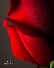 Be my Valentine... (Alex Stoen) Tags: 5dmk2 alexstoen alexstoenphotography canon canoneos5dmarkii