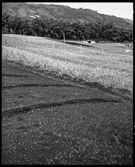 10-11-17_01 02 (favianroldan) Tags: tmax400 film xtol11 kodaktmax400 analograngefinder mediumformat mamiya7 risaralda colombia southamerica laflorida blackandwhitephotography