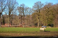 Landscape (JaapCom) Tags: jaapcom landscape landed landschaft deer animal trees wezep ijsselvliedt dutchnetherlands naturel nature hollanda nikond5100 outdoor nikkor